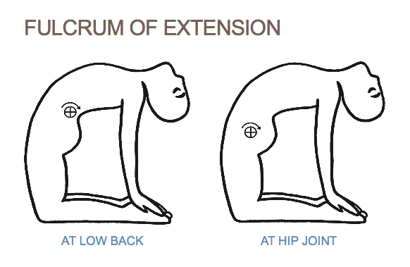 Why Use Glute Max in Back Bends? Part 1