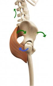 Why Use Glute Max in Back Bends, Part 2