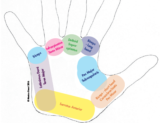 Mapping Out The Hand